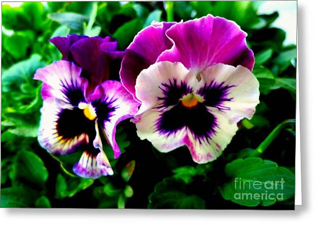 Violet Pansies Greeting Card
