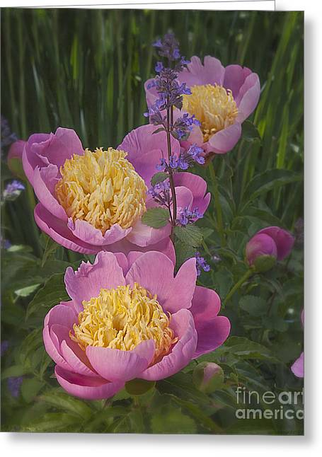 Pink Peonies In My Garden Greeting Card by Ann Jacobson