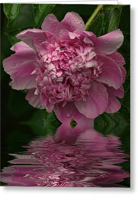 Pink Peony Reflection Greeting Card