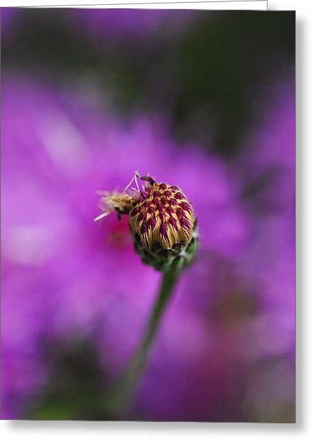 Greeting Card featuring the photograph Pink Perfect by Susan D Moody