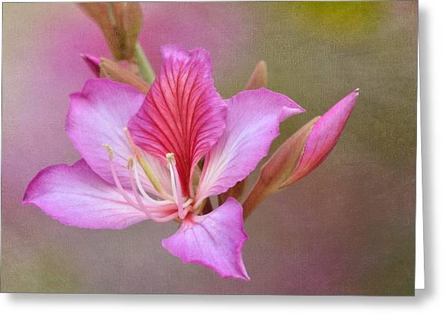 Pink Persuasion Greeting Card by Fraida Gutovich