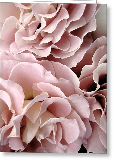 Pink Petal Profusion Greeting Card by Ann Powell