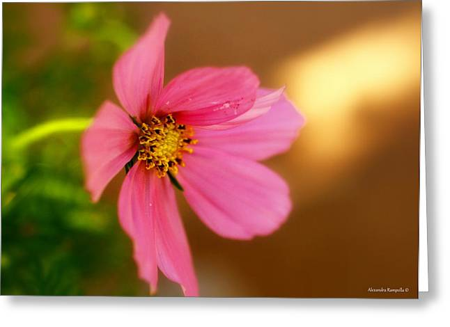 Pink Petals Greeting Card by Alexandra  Rampolla