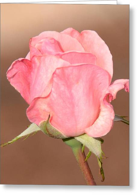 Pink Petals Greeting Card by Julie Cameron