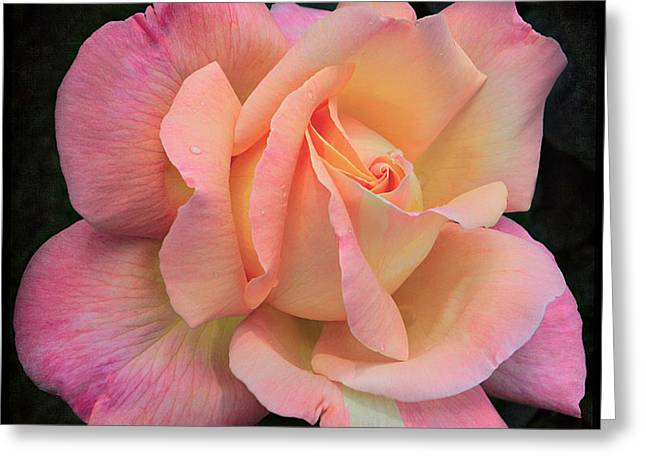 Greeting Card featuring the photograph Pink Petals by Kim Andelkovic
