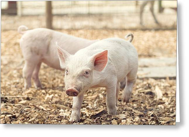Pink Piglet Greeting Card by Stephanie McDowell
