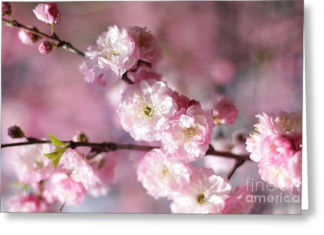 Pink Plum Branch 1 Greeting Card