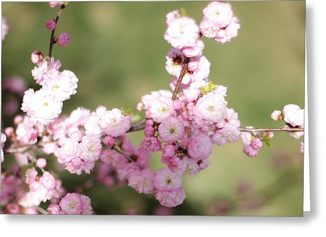 Pink Plum Branch On Green 2 Greeting Card