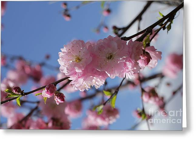 Pink Plum On Sky 2 Greeting Card