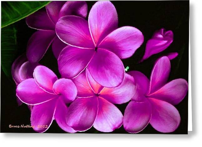 Pink Plumeria Greeting Card by Bruce Nutting