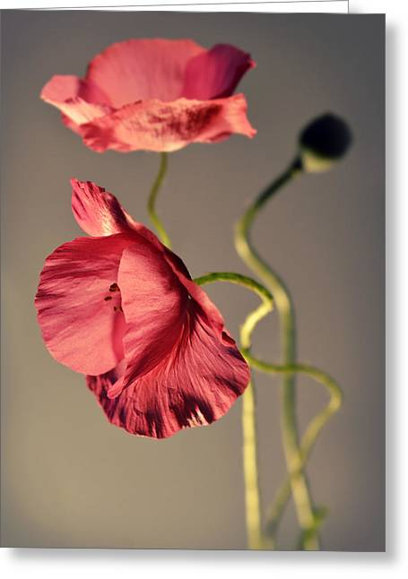 Pink Poppies Composition Greeting Card by Jaroslaw Blaminsky