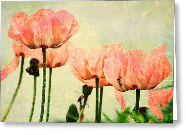 Greeting Card featuring the photograph Pink Poppies In The Garden by Peggy Collins
