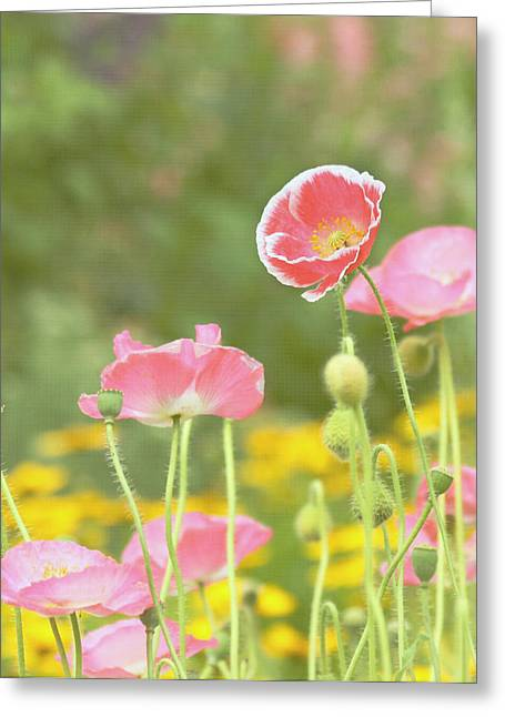 Pink Poppies Greeting Card by Kim Hojnacki