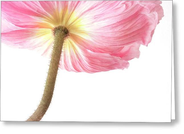 Pink Poppy Greeting Card by Priska Wettstein