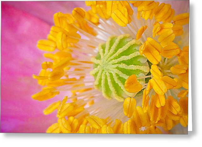 Pink Poppy Too Squared Greeting Card by TK Goforth