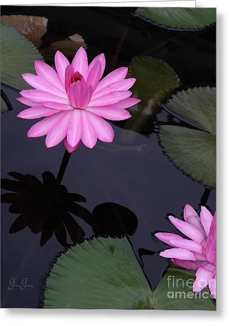 Pink Pose Greeting Card by Geri Glavis