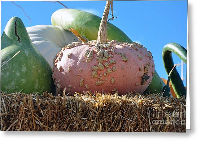Greeting Card featuring the photograph Pink Pumpkin And Friends by Minnie Lippiatt