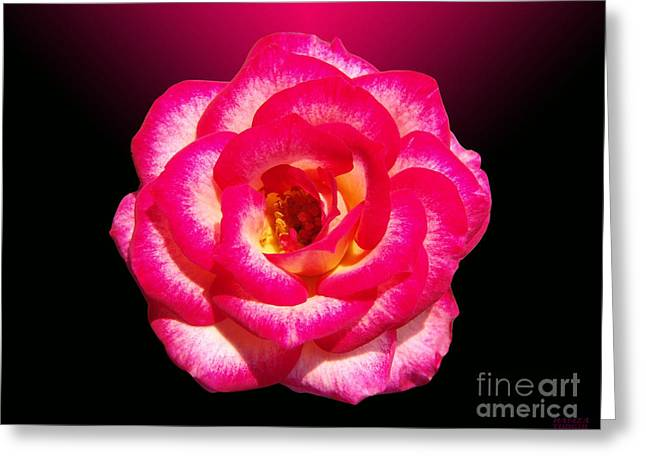 Greeting Card featuring the photograph Pink Queen  by Hanza Turgul