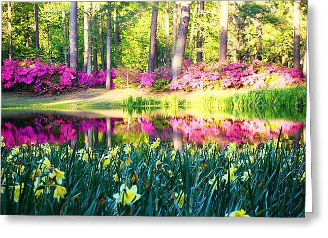 Pink Reflections By Jan Marvin Greeting Card