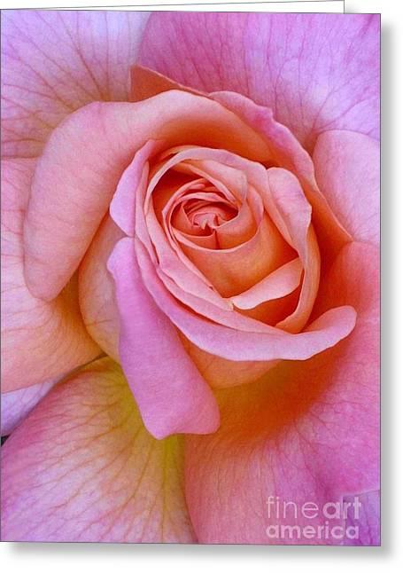 Pink Rose Closeup II Greeting Card
