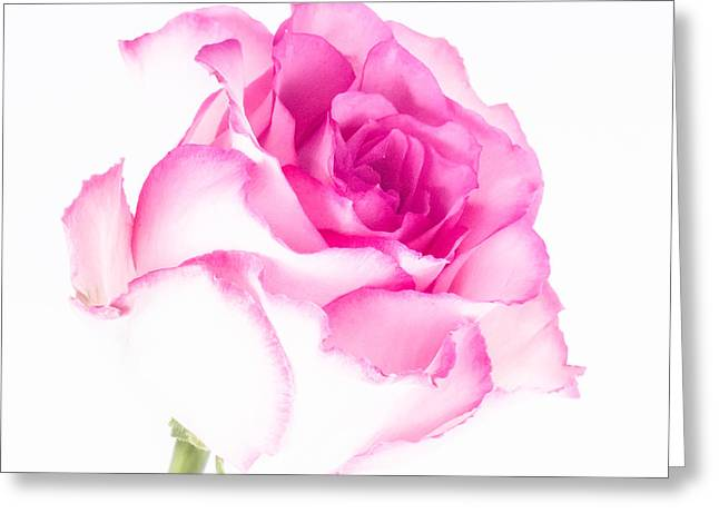 Pink Rose Confection Greeting Card