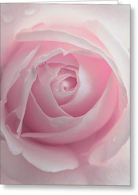 Pink Rose Flower Macro Greeting Card by Jennie Marie Schell