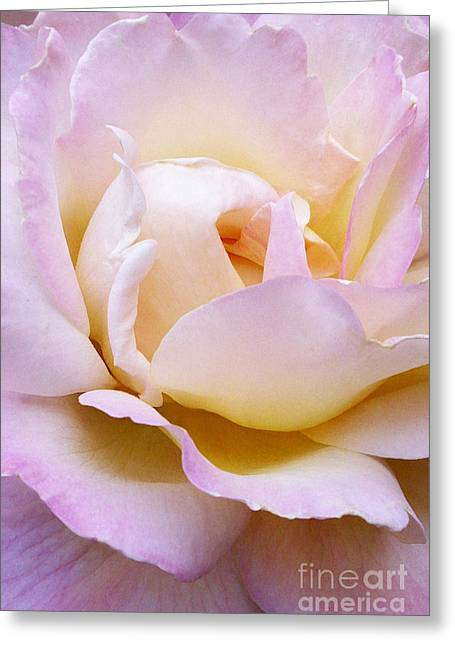 Pink Rose Forming Greeting Card by Paul Clinkunbroomer