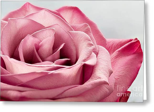 Pink Rose Macro Greeting Card