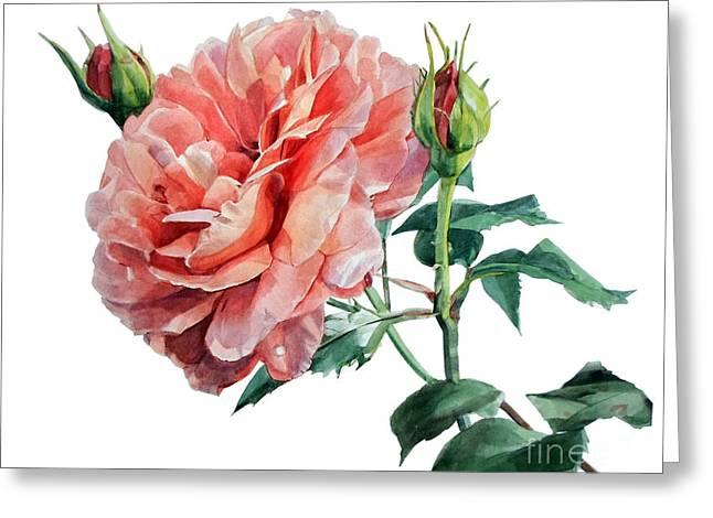 Pink Rose Odette  Greeting Card