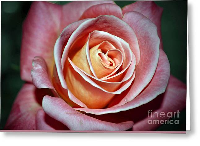 Greeting Card featuring the photograph Pink Rose by Savannah Gibbs