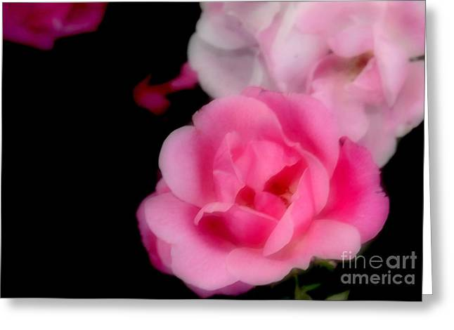 Pink Roses Greeting Card by Kathleen Struckle
