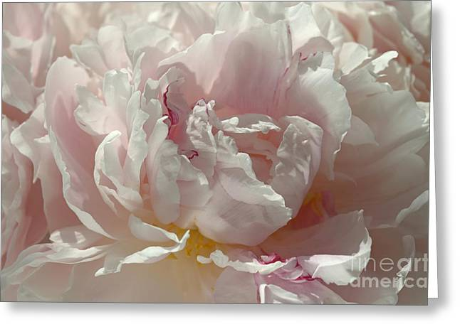 Pink Ruffles Greeting Card