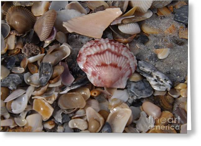 Pink Shell Greeting Card