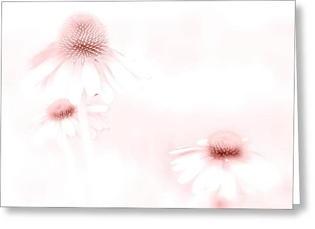 Pink Sonata  Greeting Card