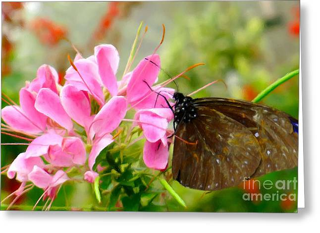 Pink Spider Flower With Butterfly Greeting Card