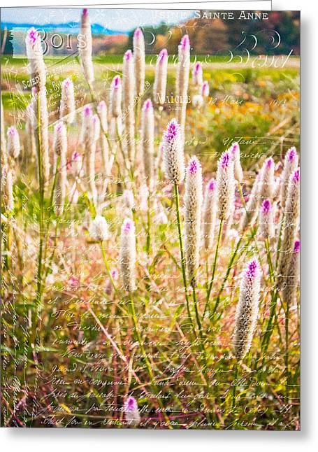 Pink Spiky Flowers With French Handwriting Greeting Card by Karen Stephenson