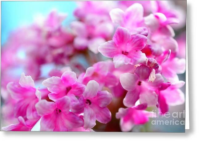 Pink Spring  Greeting Card by Sabine Jacobs