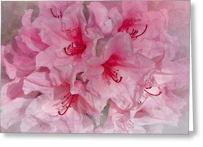 Pink Springtime Rhododendrons Greeting Card by Jacqi Elmslie