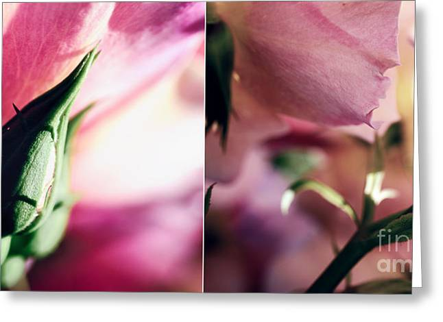 Pink Summer Roses Greeting Card by Sabine Jacobs