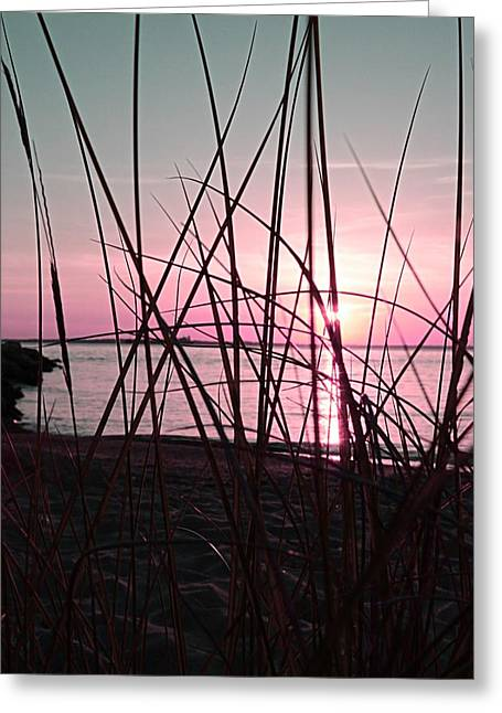 Pink Sunset Greeting Card by Marianna Mills