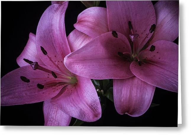 Pink Tiger Lilies Greeting Card