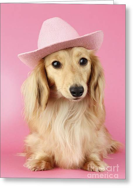 Pink Times Greeting Card by Greg Cuddiford