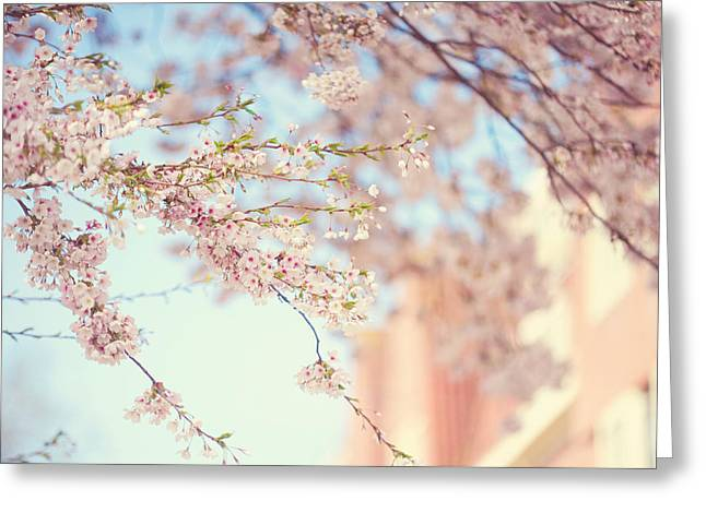 Pink Touch Of Softness. Pink Spring In Amsterdam Greeting Card by Jenny Rainbow