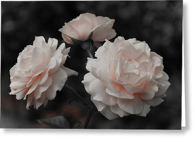 Pink Trio Greeting Card by Michelle Joseph-Long