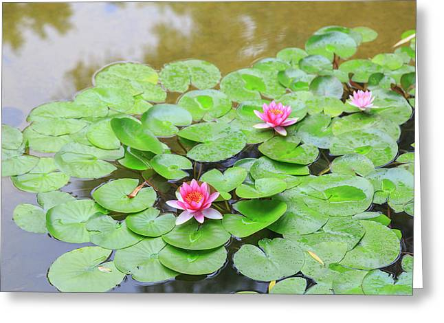 Pink Water Lilies, Lake View Hotel Greeting Card