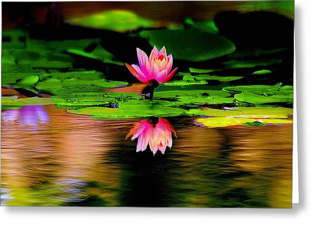 Pink Water Lilly Greeting Card by Ed Roberts