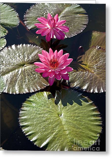 Pink Water Lily IIi Greeting Card by Heiko Koehrer-Wagner