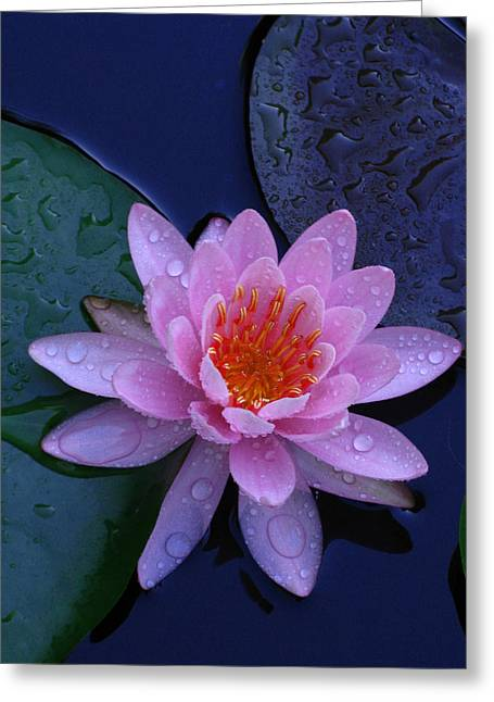 Greeting Card featuring the photograph Pink Waterlily by Raymond Salani III