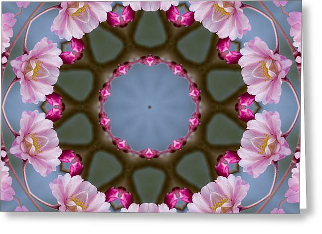 Pink Weeping Cherry Blossom Kaleidoscope Greeting Card by Kathy Clark