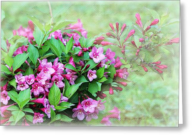 Greeting Card featuring the photograph Pink Weigela by Trina  Ansel